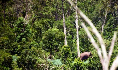 Elephant Kirisia Forest (Small)